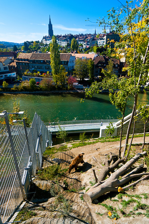 Finn (male bear), View from the BearPark (Barenpark) with the Aare River and the medieval city center behind, Bern, Canton Bern, Switzerland