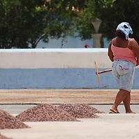Mujer de Chuao se retira despues de esparcen las semillas de cacao, para su secado y posterion recolección, Edo. Aragua, Venezuela