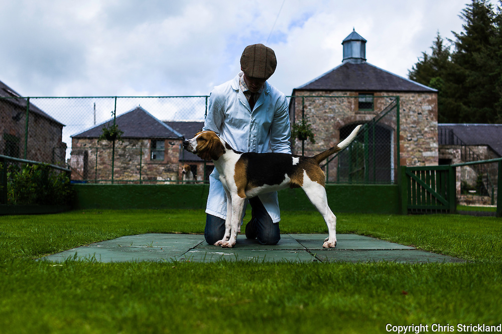 Abbotrule, Bonchester Bridge, Hawick, Scotland, UK. 19th July 2015. Huntsman Johnny Richardson and hound pup Wayward, sired by Windsor and from the Tynedale line of bitch Anxious.