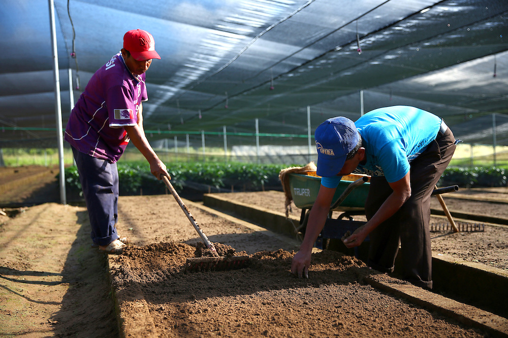 Workers plant seeds in a bed at the Jaltenango coffee tree nursery in Chiapas, Mexico. (Joshua Trujillo, Starbucks)