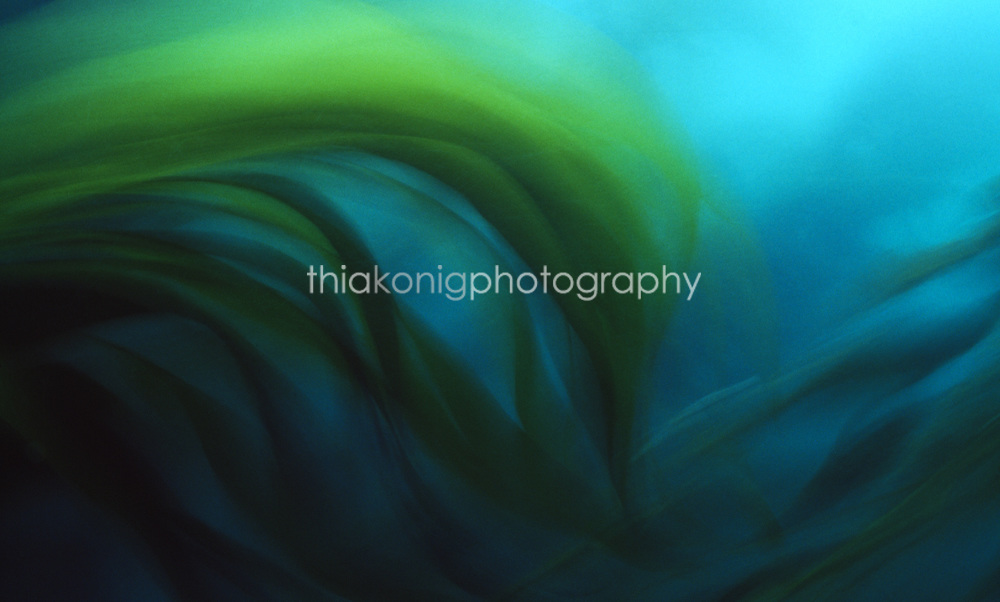 Giant kelp in motion with heavy swell, underwater, Channel Islands, California