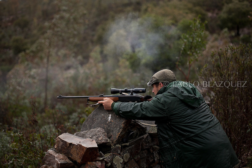 Pedro Bravo 48, fires his riffle at a deer near Carbajo on January 19 2013, in Caceres Province, Extremadura, Spain. .Caceres has a well preserved natural environment. Plenty of its surface is dedicated to deers and wild boars hunting, making this, an important part of its economy. But most of the land belongs to large landowners. .In Carbajo, people gather three times a year to hunt deers and wild boars. In the past, they used to hunt for eating, but now days, they practice it as an sport and a social event. Then, they sell what the catch as wild game meat.