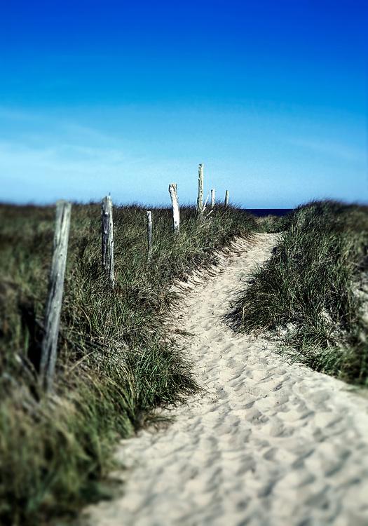 Dune path to the beach, Cape Cod, MA