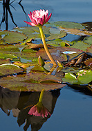 Water and Lotus