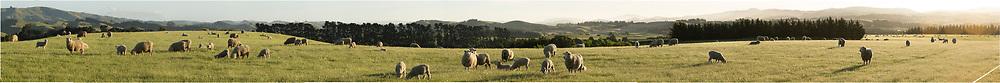 Sheepfarming panorama in Canterbury
