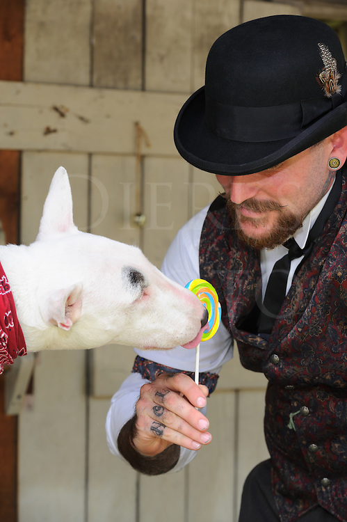 Happy Victorian man in bowler hat having fun with his bull terrier dog licking a lollipop.
