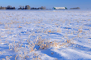 Fog and hoarfrost on farmland<br /> Green Acres<br /> Saskatchewan<br /> Canada