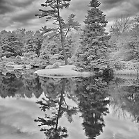 Black and white infrared image of reflection on pond in Acadia National Park Maine.