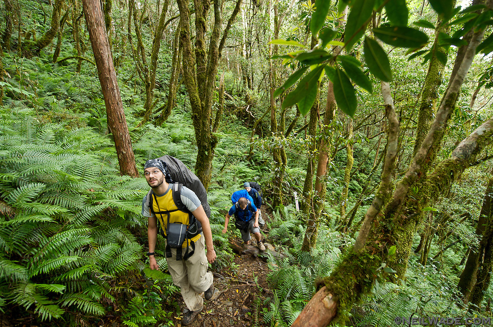 Hikers walk through a lush Taiwan mountain forest filled with moss and ferns.