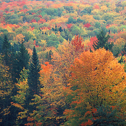 Northern hardwood forest in fall. Twin Mountain, NH.  White Mountain N.F., NH