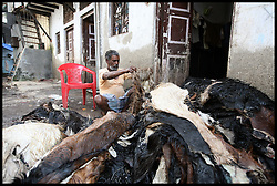 A man strips dead goats to make leather jackets in Dharavi Slum in Mumbai is one of the largest slums in the world, it is where Slumdog Millionaire was filmed. Photo by Andrew Parsons/  i-images