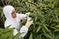 Worker in protective suit measuring plants elevated view