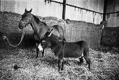 1967-04/08 Arkle at Maynooth