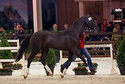 076, Pegasus vd Guldennagel<br /> Hengstenkeuring BWP - Lier 2018<br /> © Hippo Foto - Dirk Caremans
