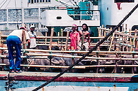 Java, East Java, Surabaya.  Cattle transport in Kalimas harbour