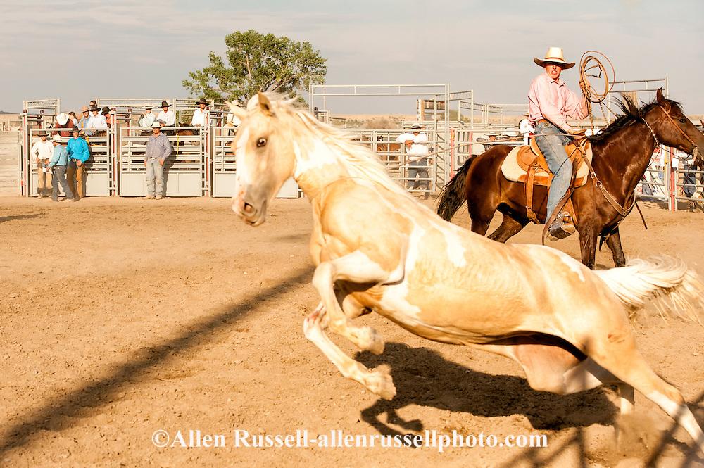 Will James Roundup, Ranch Rodeo, Wild Horse Roping, Caleb French, Hardin, Montana.