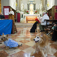Animals Blessing in Venice 2013