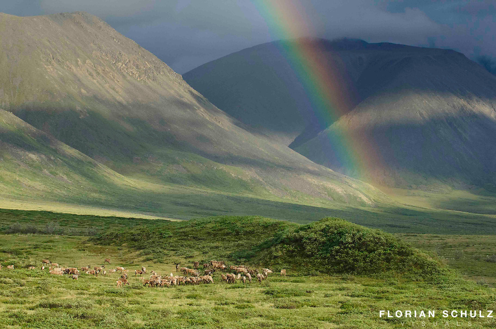 Summer storms are common in the Arctic during the warmer months. Once its over, the sun shines through the clouds revealing rainbows across the hilly country of the Brooks Range. Alaskan Arctic.