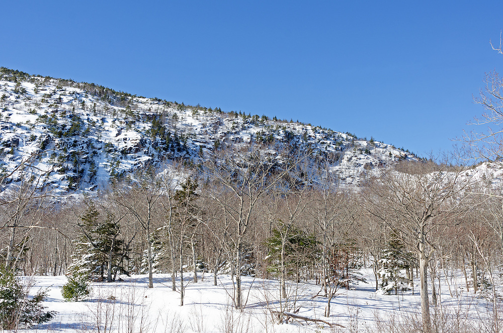 Snow-covered Champlain Mountain rises over a leafless woodland in Acadia National Park, Maine.