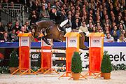 Willem Greve - Gringo<br /> Finale Blom Hengstencompetitie 2015/2016<br /> KWPN Hengstenkeuring 2016<br /> © DigiShots