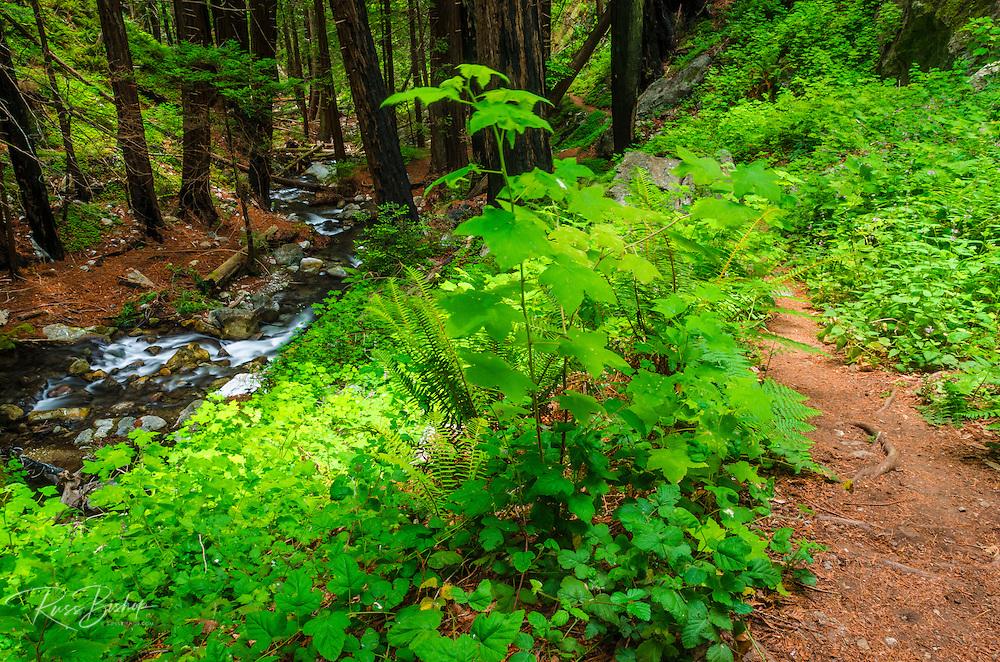 Trail on Hare Creek, Lime Kiln State Park, Big Sur, California USA