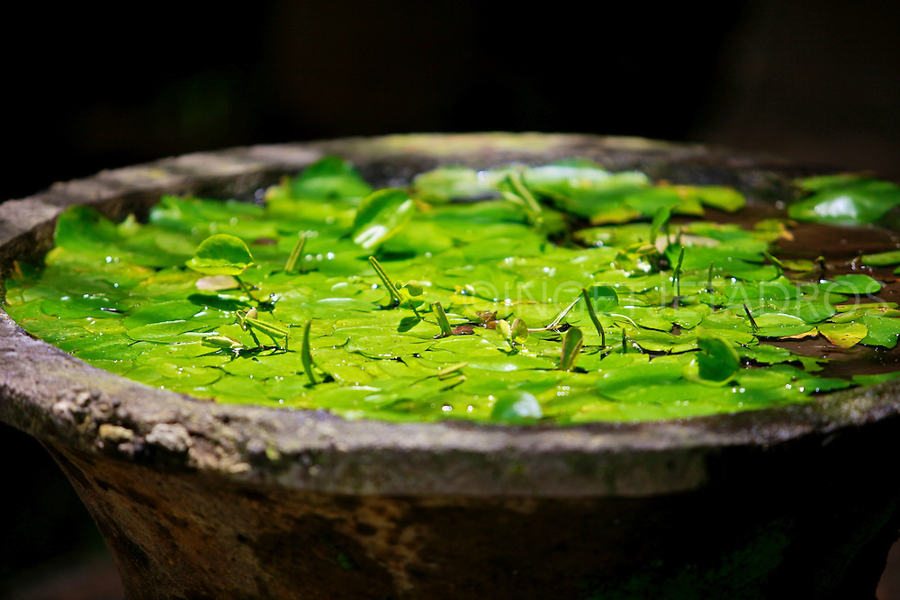 Water lilies in an old stone pot in Hotel Komaneka , the soul of Bali in the heart of Ubud.<br />