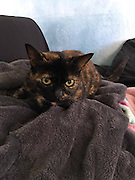 """Lost Cat Reunites With Her Owner After 15 Years Apart <br /> <br /> Three weeks ago, Tori Takayesu got a call from the Maui Humane Society shelter about her lost cat, but she had no idea what they were talking about.<br /> <br /> """"I was like, 'What cat?'"""" said owner ToriTakayesu . """"And they said, 'Oh, we have your tortoiseshell tabby, and she's fine, and we're waiting for you to come by.' But I hadn't had a cat in 15 years.""""<br /> Takayesu figured the shelter had made a mistake, and that someone — the cat's real owner — would eventually claim her. But no one did, and the shelter kept calling Takayesu. Over the weekend, an animal control officer even visited Takayesu's house to remind her about the cat waiting at the shelter.<br /> <br /> """"They said it was a senior cat,"""" Takayesu said. """"I was concerned that nobody would adopt her, and she'd be euthanized or something. I didn't want that on my conscience, so I decided to pull her out, whomever she belonged to.""""<br /> <br /> Four days after the initial call from the shelter, Takayesu went to collect the mystery cat. The staff delivered the cat to Takayesu in a carrier. When Takayesu opened it, she got the biggest surprise.<br /> <br /> """"I opened it up, and I was like, 'Oh my god! That's my cat,'"""" Takayesu said. """"It was crazy."""" The cat turned out to be James, a female cat Takayesu and her family had owned 15 years ago. She was named after a character in her son's favorite show, Thomas the Tank Engine & Friends. James the cat had first lived with the family in Kula, on the Hawaiian island of Maui, then moved with them 10 miles away to another part of Maui, Makawao.<br /> <br /> """"She was fine for a month [in Makawao] — she had the same routine,"""" Takayesu said. """"She'd come in at night, and during the day, she'd wander in and out. Then we noticed she didn't come in at night. We went looking for her and couldn't find her.""""<br /> <br /> The family searched for a month, driving around each evening to look for her. They even we"""