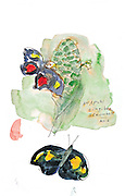 Sketch from the Tropical Butterfly House at Pacific Science Center. (Gabriel Campanario / The Seattle Times)