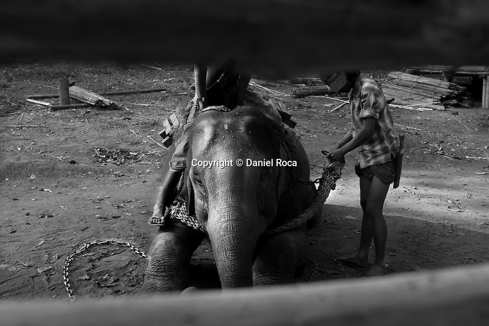 Two young mahout readying an elephant for work. Forest Village, between 16 and 17 miles from Taungoo. Myanmar, February 2014.