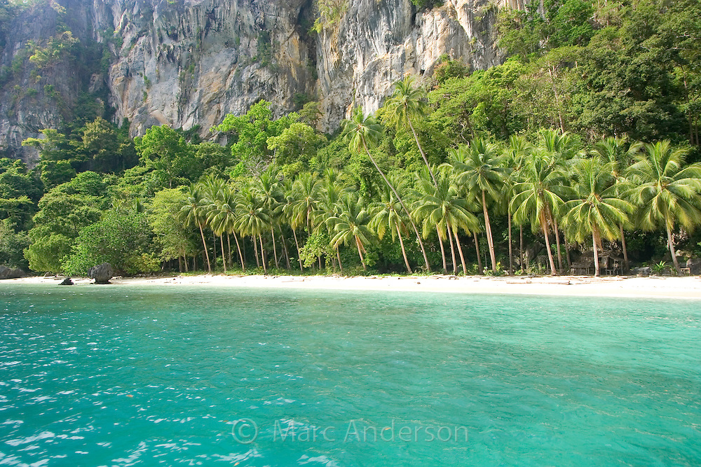 Clear blue water & a tropical island beach lined with palm trees in the Bacuit Archipelago, El Nido, Palawan, Philippines