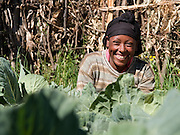 Meseret Assefa, Age 27, working in her vegetable garden. Meseret is in Mesoman Bedatu Group. She is married to Assefa Dinka and they have three children: Getu Assefa(M), AGE 8 years old, Chaltu Assefa(F), age 5 years old, and Ogari Assefa(M), age 2 years old.