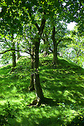 Oak trees in woodland at Furness Fells in Lake District National Park, Cumbria, UK
