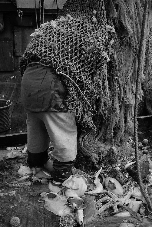 Cleaning out the nets, on PZ 198, the 'Aaltje Adriaantje', working out of Newlyn, Cornwall, England.<br /> <br /> In recent years commercial fishermen have been severely restricted in the amount of certain species of fish they can catch, due to the harsh quotas imposed on them by the Common Fisheries Policy, which is regulated by the European Union.<br /> <br /> Millions of pounds worth of fish are wasted each year after the fishermen are forced to throw part of their catch back into the sea dead or dying, thus creating anger and tensions within an industry that is already struggling and feels it is being unfairly penalised.