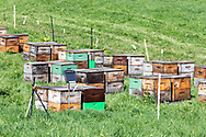 Bee hives in a Fraser Valley, British Columbia apiary