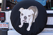 Bulldog guarding the spare tyre of a vehicle in the Beacon Hill historic district of Boston, Massachusetts, USA
