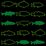 Silhouette of 15 green fish on black background