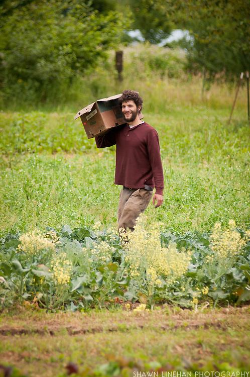 Male farm worker on Dancing Roots Farm.