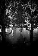 Paris . Flooding . The Seine river  at  the quay de la Tournelle. trees in the seine river like in a mangrove