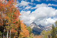 Bright, fall colors in the trees contrast well against the mountains and blue sky in Grand Teton National Park on Friday.