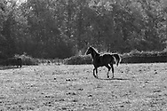 Horse and Nature