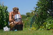 Scientist collecting invasive mosquito species to Germany. Asian tiger mosquito (Aedes albopictus),  Freiburg, Germany | Stefanie Schön fängt für ihre Masterarbeit die Asiatische Tigermücke (Aedes albopictus) in Freiburg. Im Rahmen der Masterarbeit konnte die erste sich vermehrende Aedes albopictus Population Deutschlands nachgewiesen werden. Die Population befand sich räumlich begrenzt in einer Schrebergartenanlage nahe einer rollenden Autobahn.  Daraufhin wurden umgehend intensive Überwachungs- und Bekämpfungsprogramme eingeleitet. Außerdem wurden im Zuge der Arbeit mehrere Exemplare von Aedes albopictus auf Arborviren untersucht, jedoch ohne positiven Nachweis. Freiburg, Deutschland