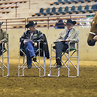 Lauren Wood | Buy at photos.djournal.com<br /> A competitor walks her horse in front of the judges in the NY Showmanship category on Friday, March 10 during the annual MSU Bulldog Classic AQHA Horse Show at the MS Horse Park in Starkville.