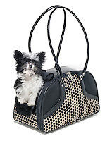 black and white dog tote with black and white dog