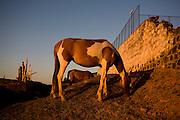 Sao Romao_MG, Brasil...Cavalo pastando em Sao Romao, Minas Gerais...A horse grazing in Sao Romao, Minas Gerais...Foto: LEO DRUMOND / NITRO