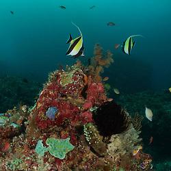 North Sulawesi 2014/2015