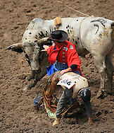 Bull Fighter protects Bull Rider Justin Clint Koon during competition, 27 July 2007, Cheyenne Frontier Days