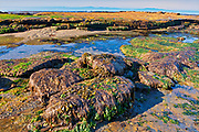 Tidal pools at Botanical Beach. Juan de Fuca Provincial Park, near Port Renfrew<br />Juan de Fuca Provincial Park, near Port Renfrew<br />British Columbia<br />Canada