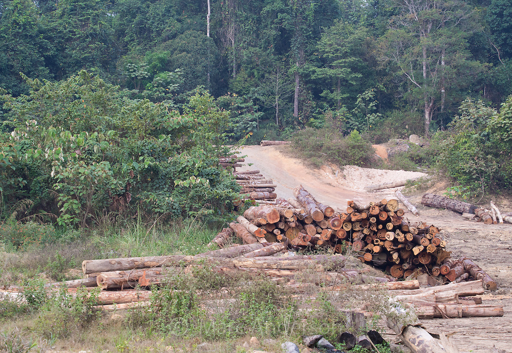 Felled timber, tree trunks, logs in a logging camp, surrounded by secondary rainforest, Pahang province, Malaysia