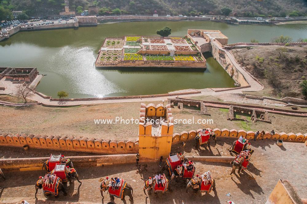 Elephant convoy Amber (Also Amer) Fort, near Jaipur, Rajasthan, India