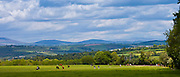 Distant view of Knockmealdown Mountains at Glengoura, County Cork, Ireland